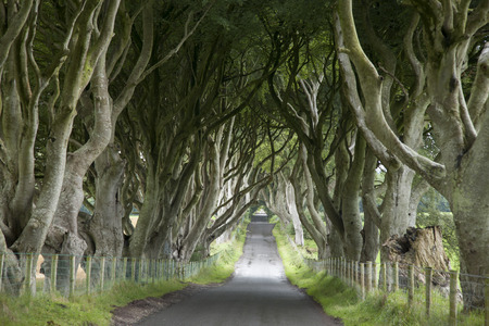 Dark Hedges, County Antrim, Noord-Ierland Stockfoto - 31345414