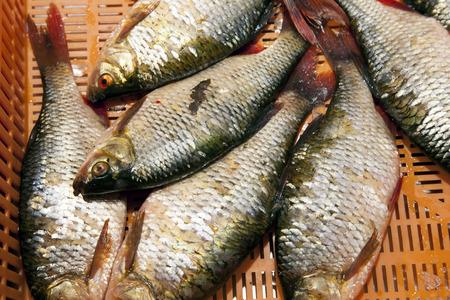 central market: Fondo de los pescados - Mercado Central, Riga Foto de archivo