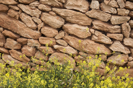 formentera: Stone Wall with Yellow Grass in Formentera; Balearic Islands, Spain