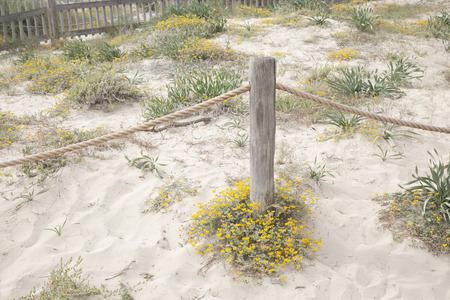 wooden post: Wooden Post on Valencians Beach; Formentera; Balearic Islands; Spain