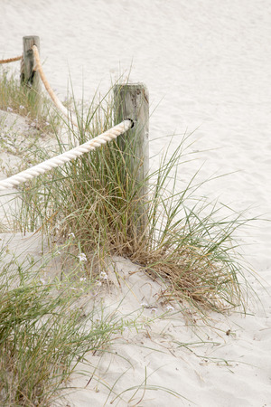 cove: Wooden Post and Grass in Saona Cove Beach