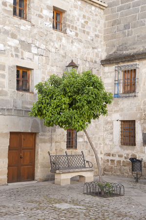 valencia orange: Orange Tree in Juan de Valencia Square, Ubeda, Andalusia, Spain Stock Photo