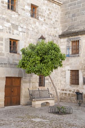valencia orange: Orange Tree in Juan de Valencia Square, Ubeda, Andalusia, Spain Stock Photo