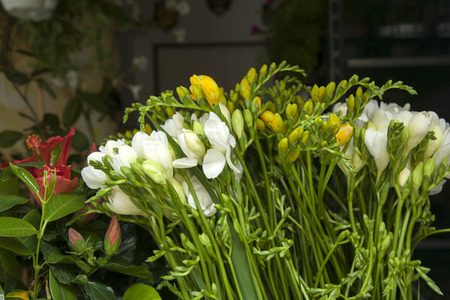marcos: Flowers for Sale on Market Stall in San Marcos Square, Venice, Italy Stock Photo