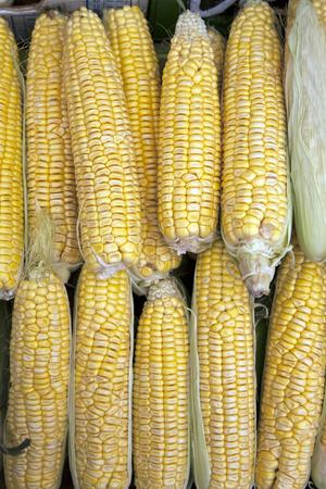 sweetcorn: Sweetcorn Background on Market Stall