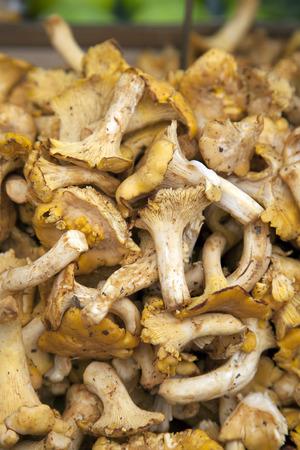 golden chanterelle: Golden Chanterelle Mushroom Background on Market Stall