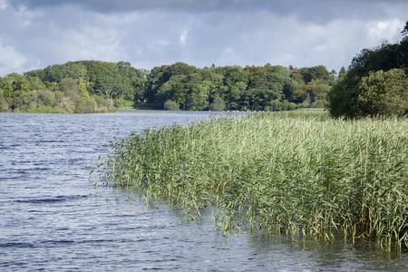 lough: Lough Leane Lake, Killarney National Park, County Kerry; Ireland