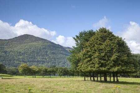 county: Killarney National Park, County Kerry; Ireland