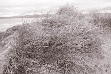 white sand beach: Rossbeigh Beach, County Kerry; Ireland in Black and White Sepia Tone