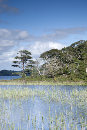 lough: Lough Leane from Dinis Cottage Cafe Path, Killarney National Park, County Kerry, Ireland