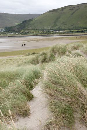 county kerry: Rossbeigh Beach Horse Riding, County Kerry; Ireland