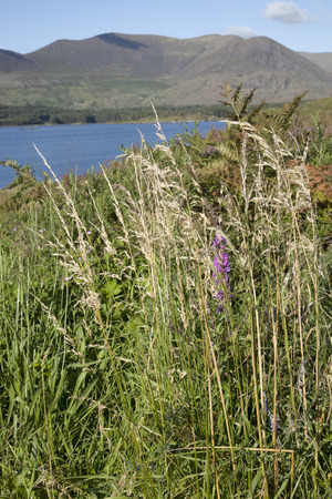 lough: Lough Currane, Waterville; County Kerry; Ireland Stock Photo