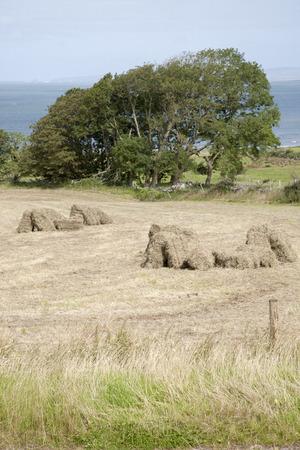 dingle: Rural Scene in Camp Village in Dingle Peninsula, Ireland Stock Photo