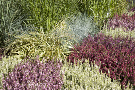 flauna: Close-up of Heather for Sale on Market Stall Stock Photo
