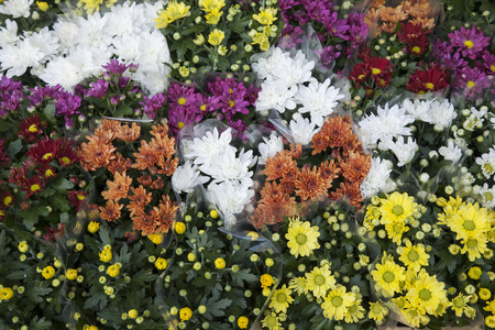 flauna: Close-up of Flowers for Sale on Market Stall