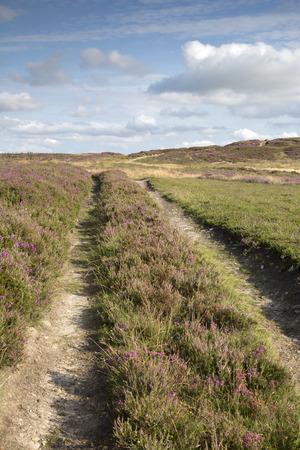 moors: Track with Heather, North York Moors; England; UK