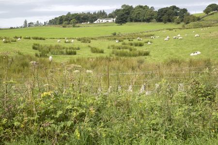 lake district: Countryside outside Keswick; Lake District; England; UK