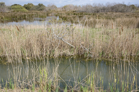 camargue: Grass and Reeds in National Park of Camargue, Provence, France