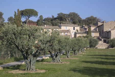 lourmarin: Lourmarin Village and Olive Trees, Provence, France, Europe