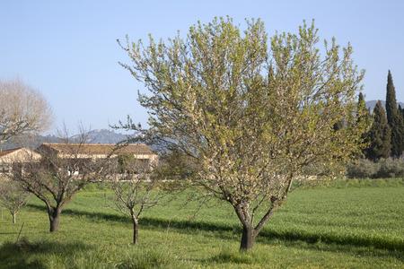 lourmarin: Trees in Countryside, Lourmarin, Provence, France, Europe Stock Photo