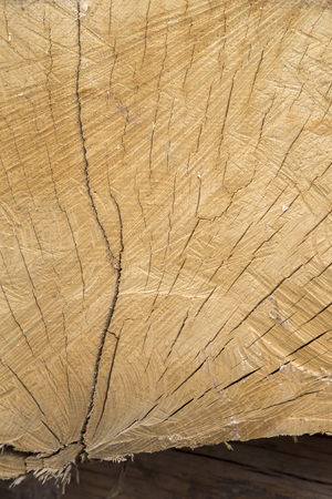 Closeup of Wood Trunk Background