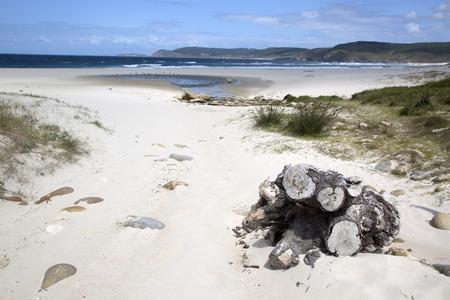 Trunk at Rostro Beach; Finisterre; Costa de la Muerte; Galicia; Spain