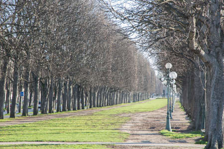 Winter Trees in Paris; France