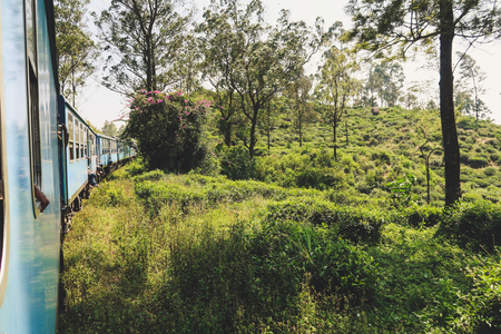Beautiful flowers and trees during the worlds most beautiful train ride in Sri Lanka
