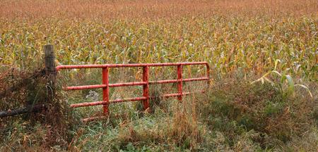 Red livestock gate open to corn field Stock Photo