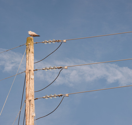 routing: Wooden power pole with seagull perched on top