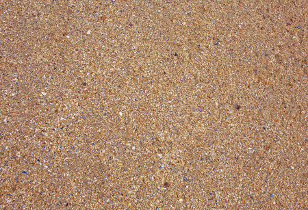 fragmented: Small and fragmented seashell background.