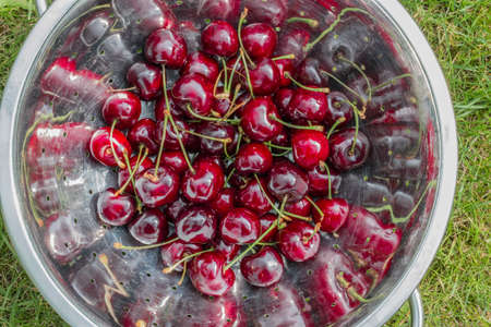 colander: with water cleaned cherries in a colander