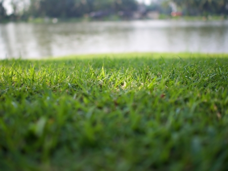 The focus shot on the sun light on the green lawn with blur lake background