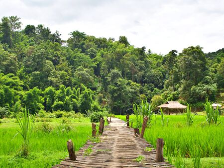 The landscape rural styel bamboo bridge with fresh air and the green rice field in Chaing Mail, Thailand.