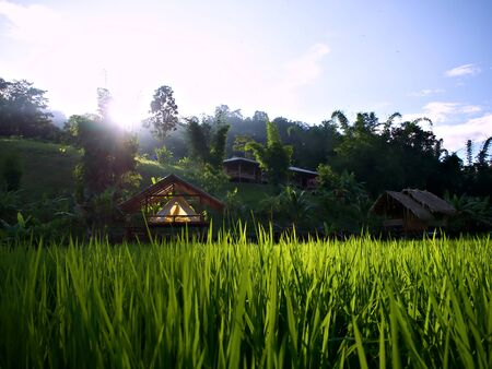 The tent, the cottage, the rice farm and the shining evening sun in ChiangMai, Thailand