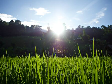 The landscape of green rice farm and the shining sun over the cottage in Chiangmai, Thailand