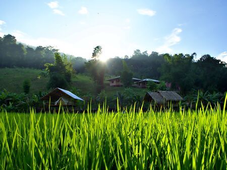 The sun that goes down in the valley with rice farm and cottage in Chiangmai, Thailand
