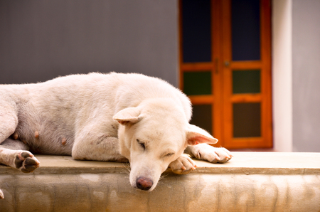 stray: A stray dog sleeping on the wall