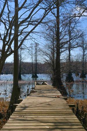 Pier in the swamp