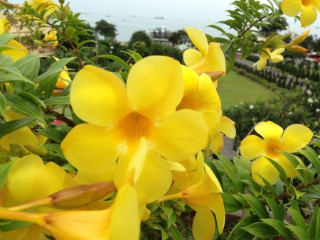 bright: bright yellow flower in the garden Stock Photo