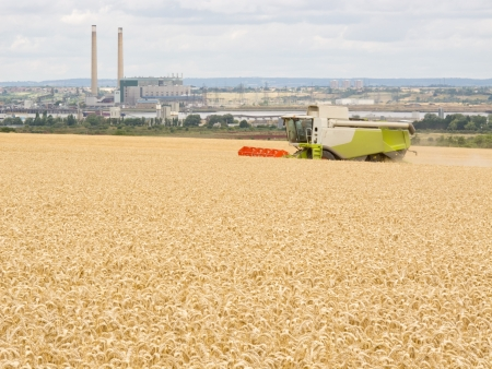 An image showing a Wheat field being harvested of its crops photo