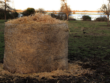 a close up view of a roll of hay Stock Photo