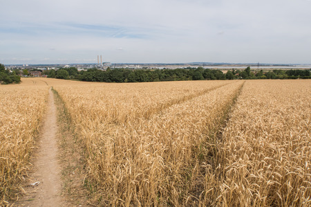 pathways: pathways cast in the fields of wheat Stock Photo