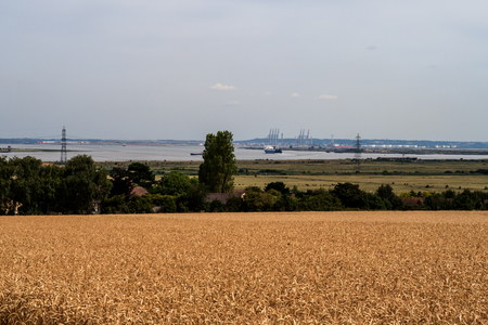 A landscape view of a golden wheat field with the River Thames in the background