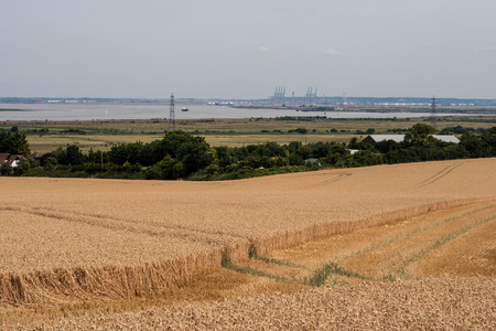 green fields: A landscape view of a golden wheat field with the River Thames in the background