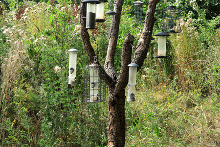 feeders: Many bird feeders hanging from the branches of a tree