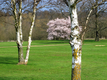 country park: Colourful view of silver birch trees in a country park Stock Photo