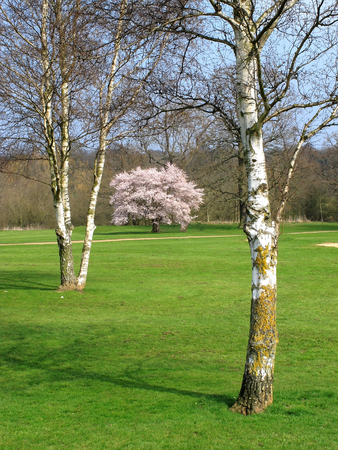 mote: Colourful view of silver birch trees in a country park Stock Photo