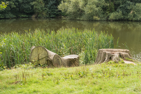 weald: Tree trunks by a lake in the Kent countryside