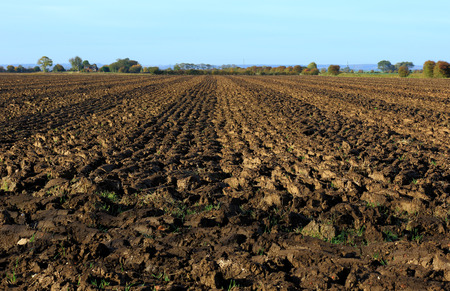 muddy tracks: plough tracks in a muddy field in Maplethorpe, Lincolnshire